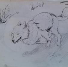 Fleeing Wolf.jpg