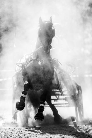 Kjørehest, stevnefotografering, Norsk Hestesenter
