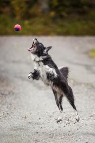 Hundefotografering, Namsos