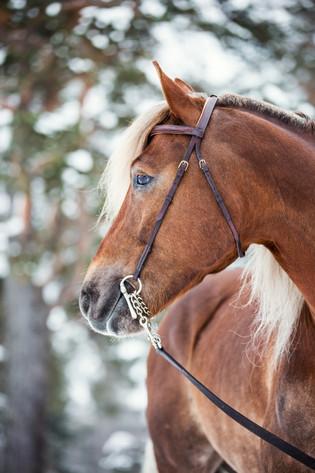 Hestefotografering, Starum