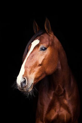 Hestefotografering, Nittedal