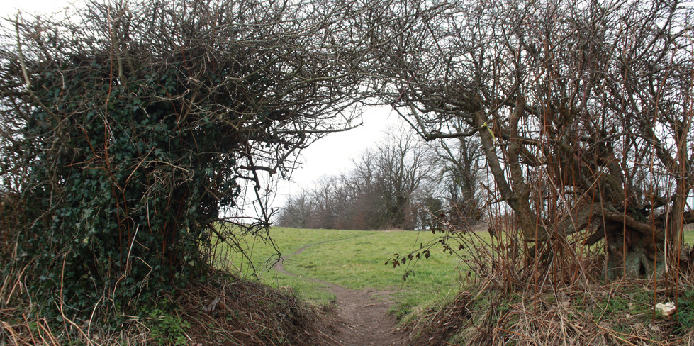 Archway in the hedge