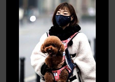 Corea del Norte prohíbe tener perros como mascotas