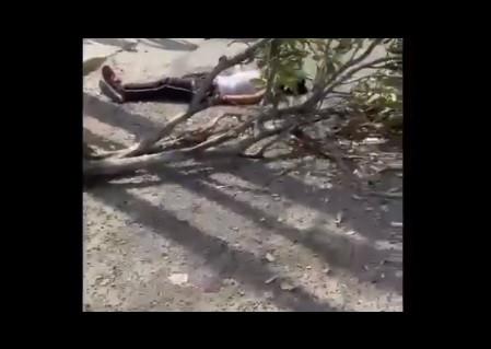 ¡Justicia por propia mano! Atropelló a los que lo asaltaron en Guadalajara, Jalisco