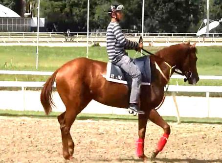 Esta es la cara del comunismo: en Venezuela roban caballo campeón de carreras…¡¡¡para comérselo!!!