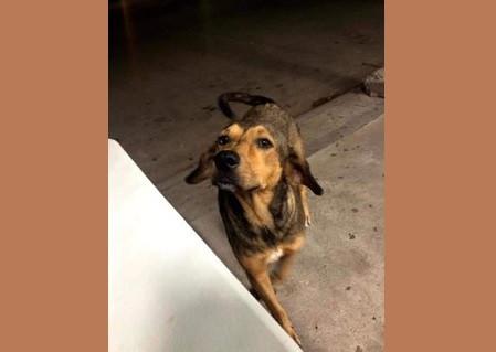Indignación por la muerte de un perro a machetazos en Los Mochis, Sinaloa
