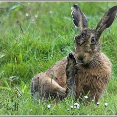 Hare Manicure