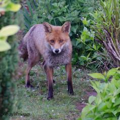 Fox May 7th