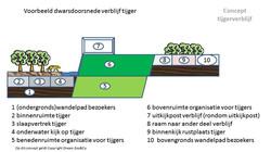 Doorsnede Tijgerverblijf (Concept)