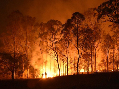 Building and Bushfires: How to navigate the requirements for Bushfire Prone Land