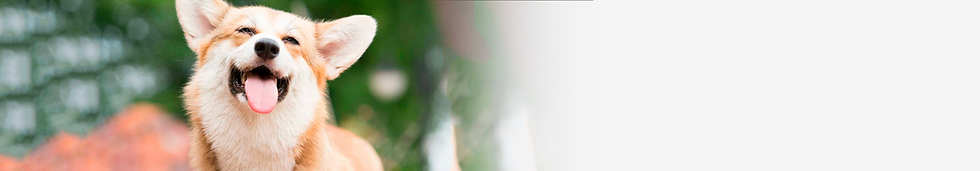 Banner_04.png