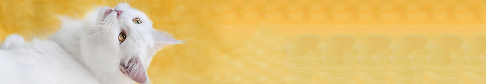 Banner_02.png