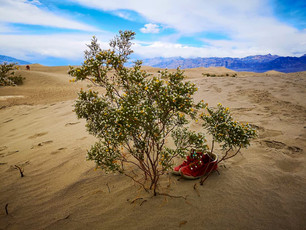 A Day in Death Valley