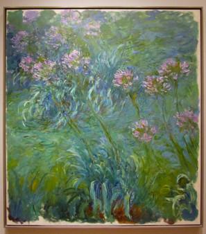 Monet - |Agapanthus
