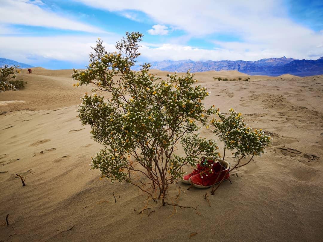 Death Valley - Mesquite Flat Sand Dune