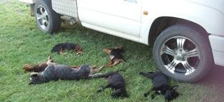 Missy & pups sleeping 2.jpg