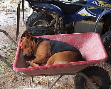 wheelbarrow 2.jpg