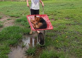 wheelbarrow 1.jpg