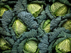 Roast Savoy Cabbage from Grovers