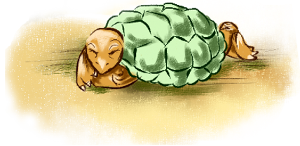 черепаха ползет к берегу озера