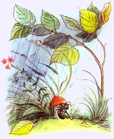 Сказки Сутеева  Под грибом читать с карт