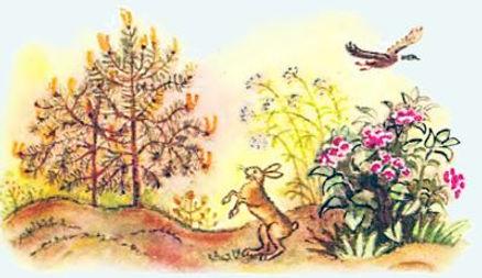 царевна лягушка сказка 12 зайчик и птичк