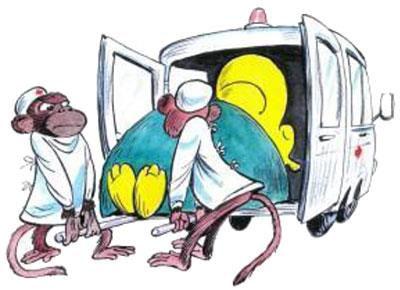 санитары укладывают бегемота в машину ск