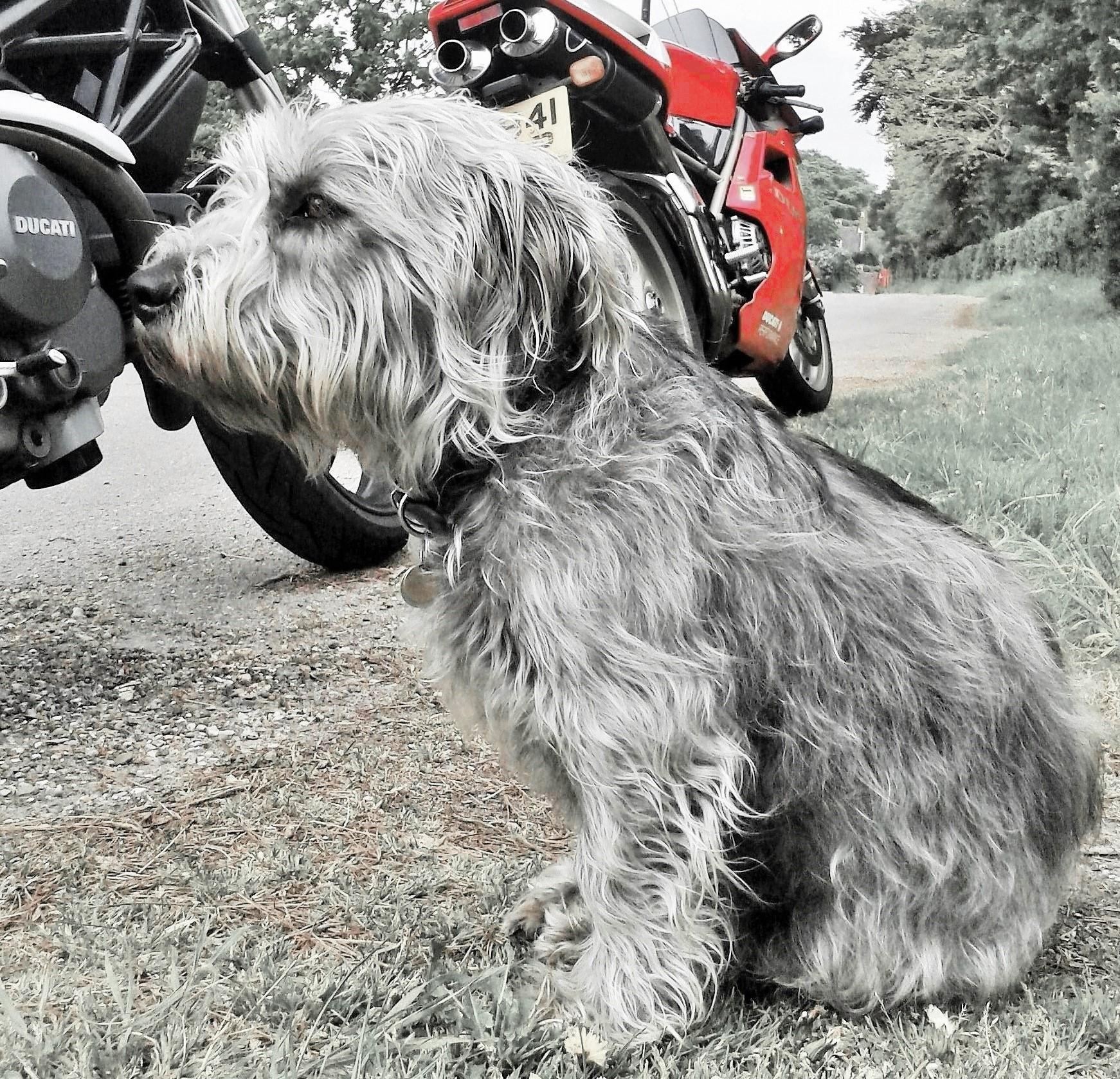 BIKER DOG 🏁