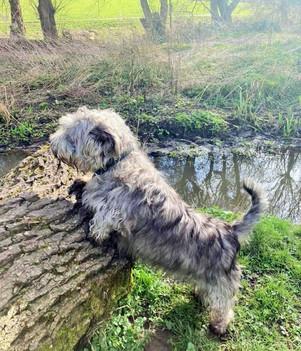 Log Buster 🐾