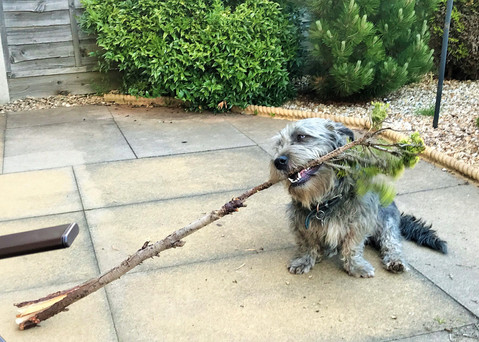 BUSTER DOES GARDENING
