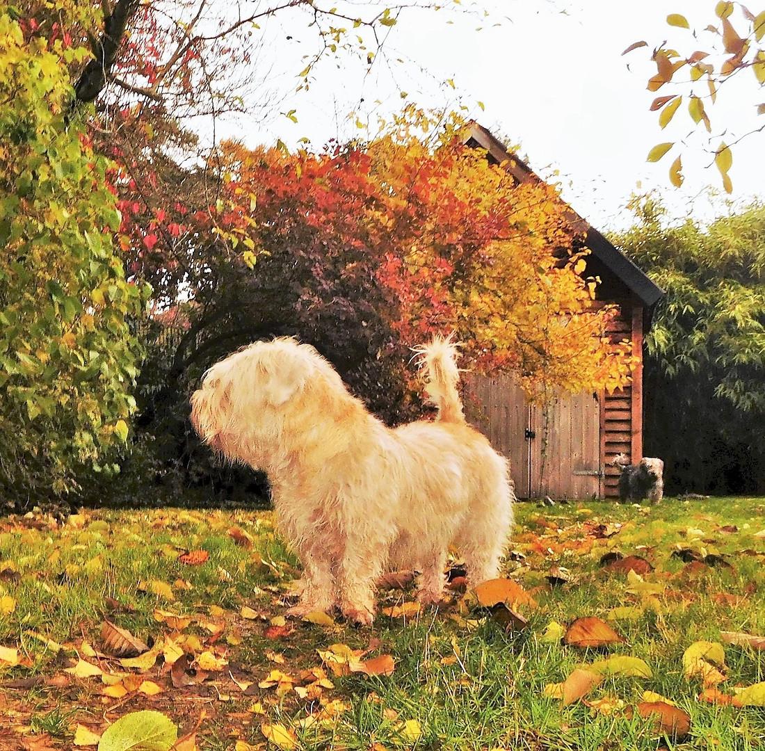 Autumn Colour 🌿🍂