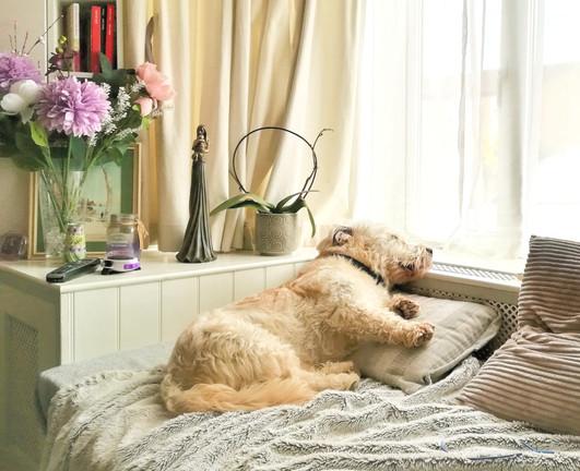 A Dog's Life 💤