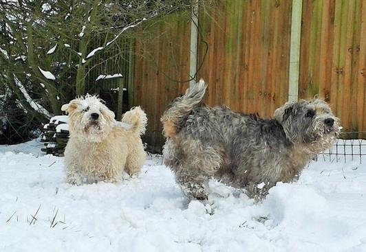 Snow Way! ⛄
