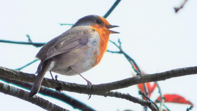 Rockin' Robin 🎸🎶