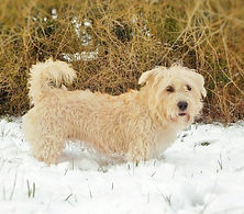 Snowdagh! ⛄ Clodagh enjoys her first snow ❄ February 2021 | www.teamhrach.com