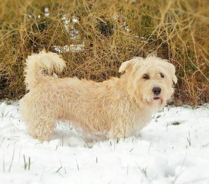 Snowdagh! ⛄