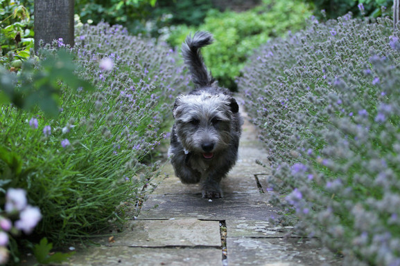 Glen In Lavender