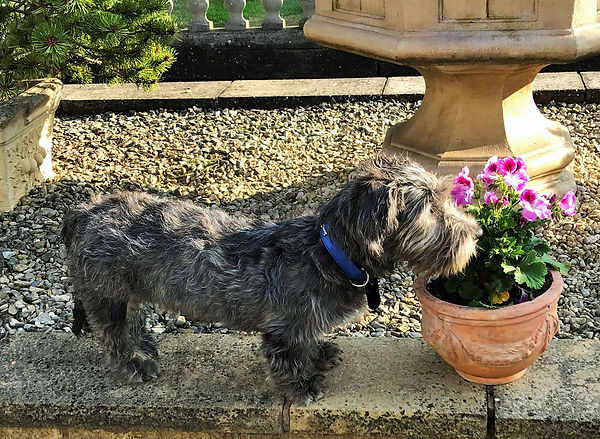 Step away from the plant pot!