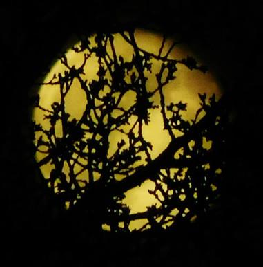 Moonlight 🎑