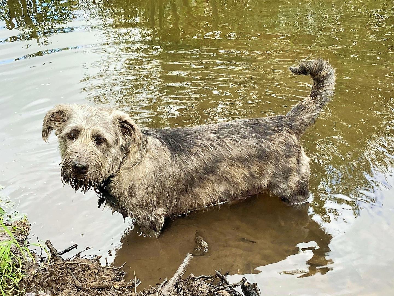 River Dog 🐾🌾⚓🚤