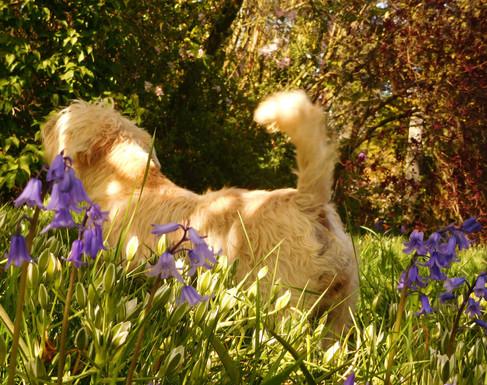 Nettle Among The Flowers 🌿