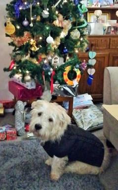 Jeff's Christmas Jumper 🎄