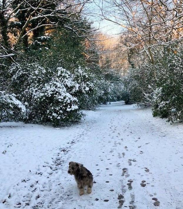 Winter Wonderland 🐾🌿❄