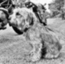 BIKER DOG 🏁 2016 | www.teamhrch.com