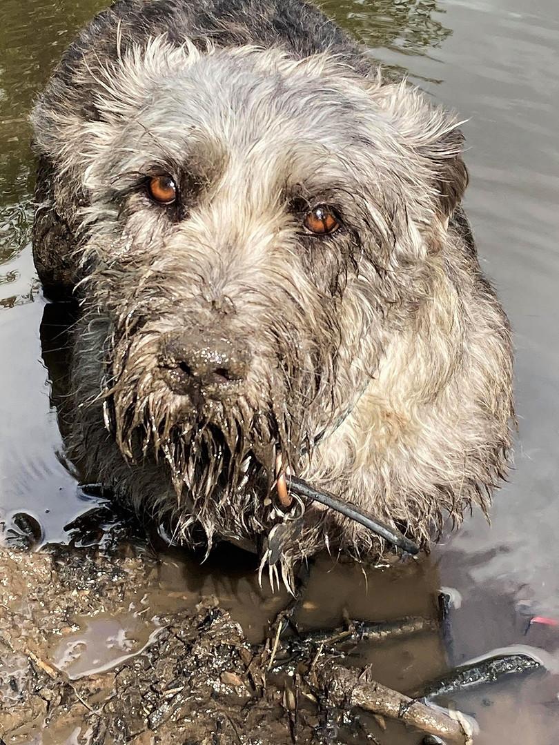 Muddy Dog 🐾