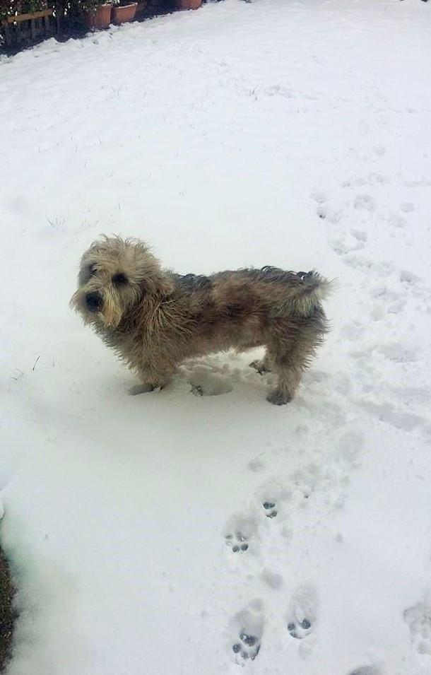 SNOW DOG ⛄ 🐾