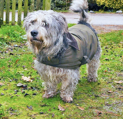 SMART COAT - SCRUFFY DOG