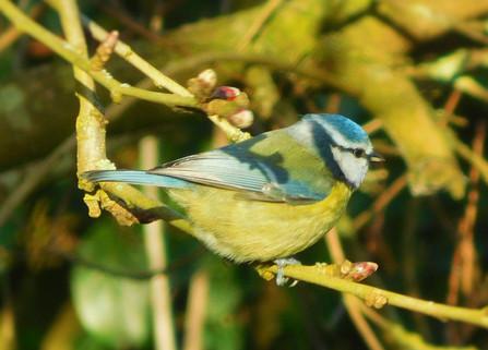 Spring Bird 🌸