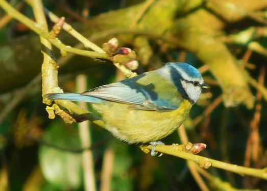 Spring Bird 🌿