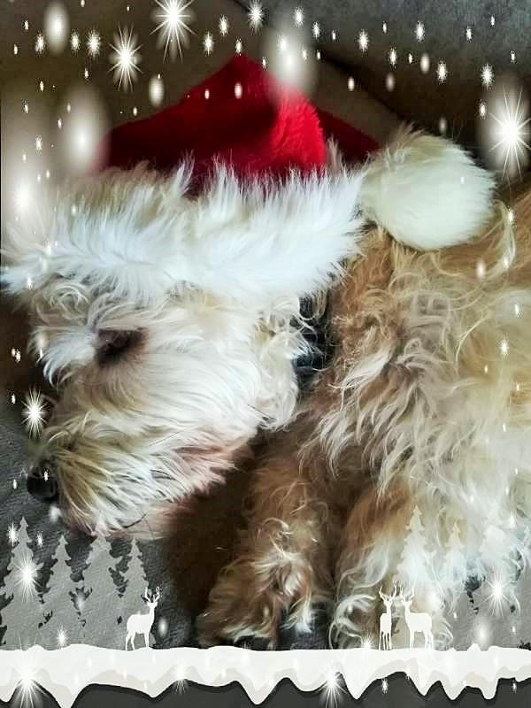 Christmas Jeff 🎅